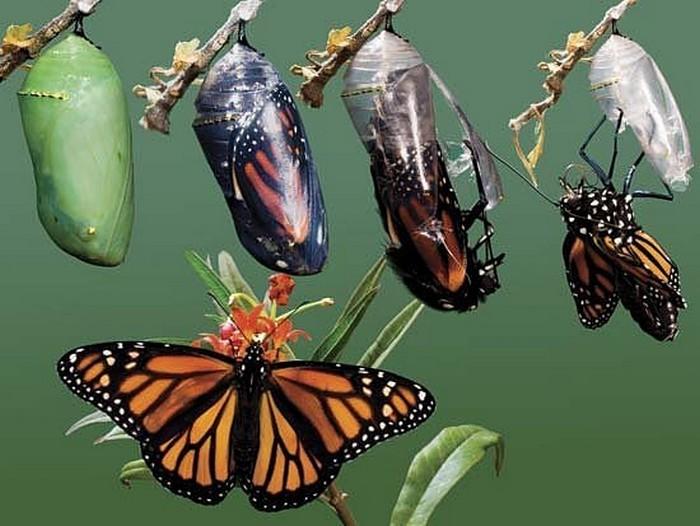 farfalla-trasformazione-blog